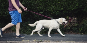 Dog Laws and important information for Dog Owners